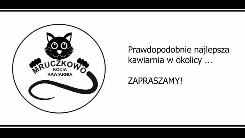Kociakawiarnia2-800x452